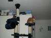 blandet-kat-zoo-180-custom
