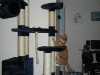 blandet-kat-zoo-174-small